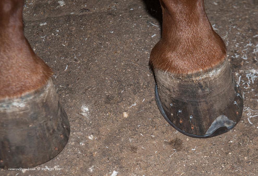 ковка лошадей 11