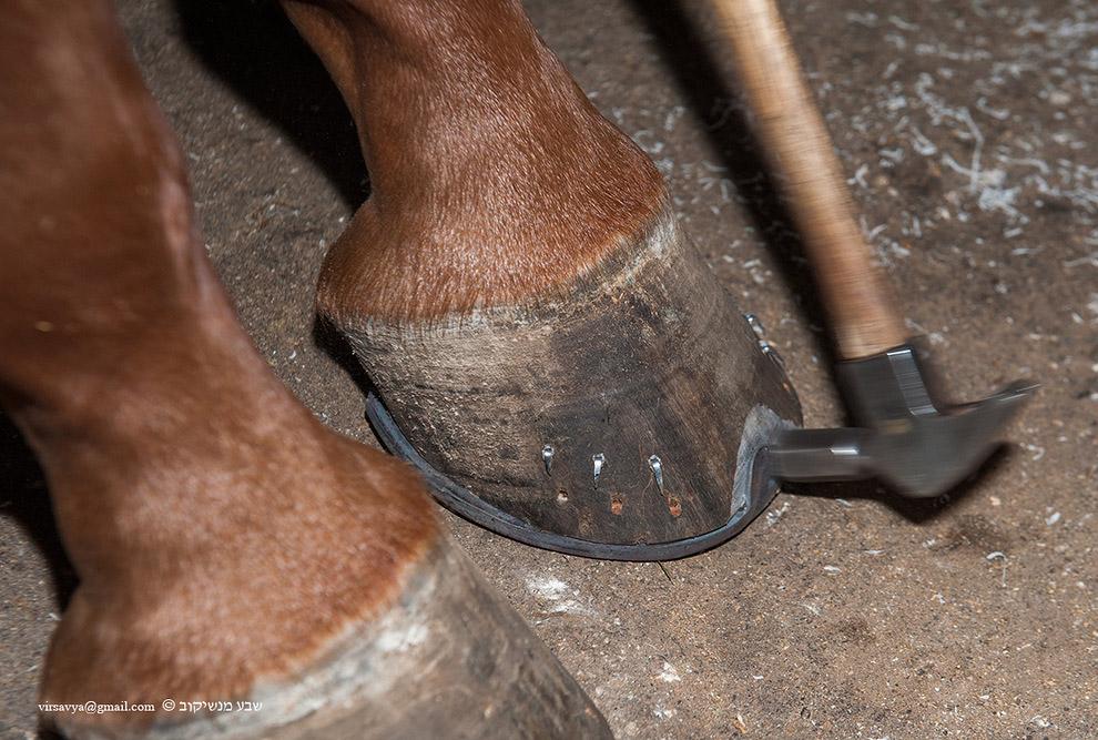 ковка лошадей 12