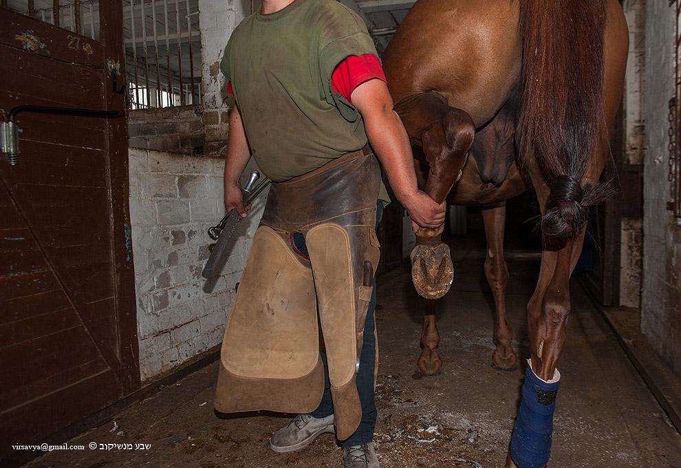 ковка лошадей 4