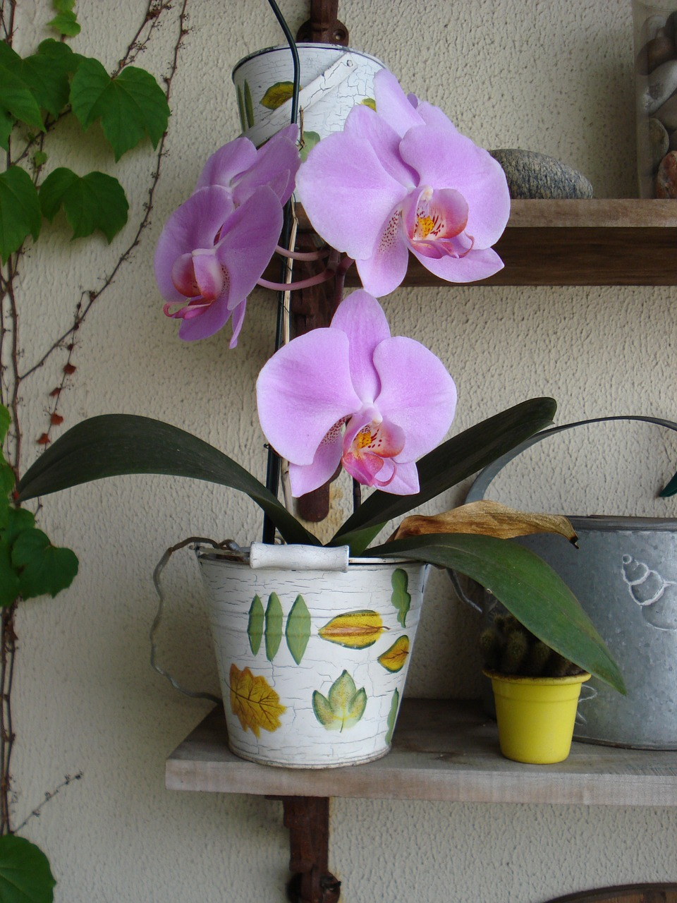 orchid-1406552_1280