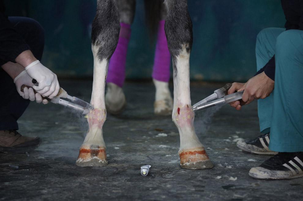 методы лечения лошадей лечение сустава лошади
