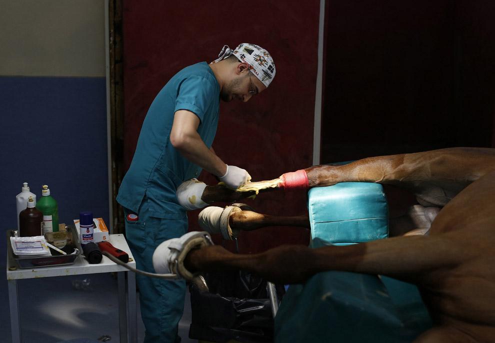 методы лечения лошадей травма скакового сустава лечение у лошади