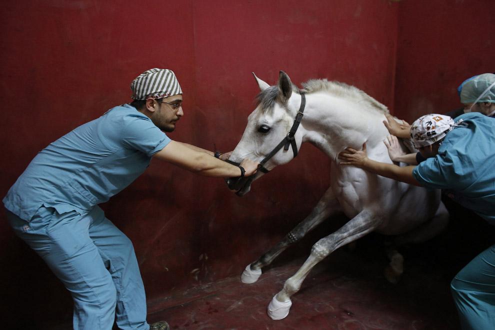 методы лечения лошадей 1