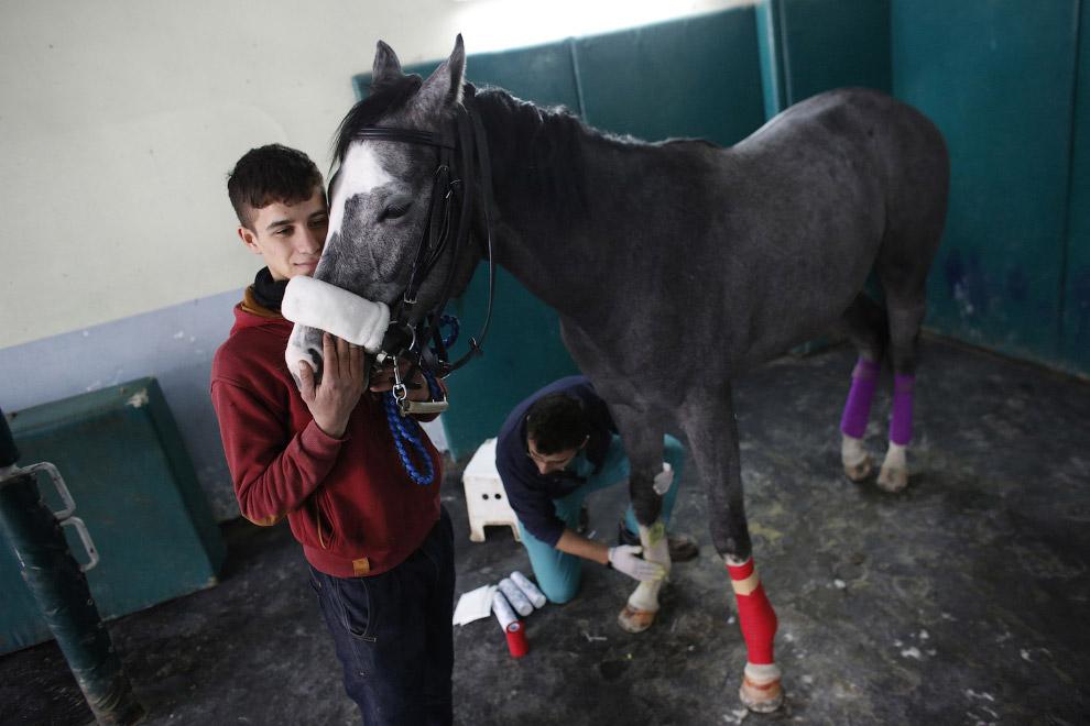 методы лечения лошадей 3