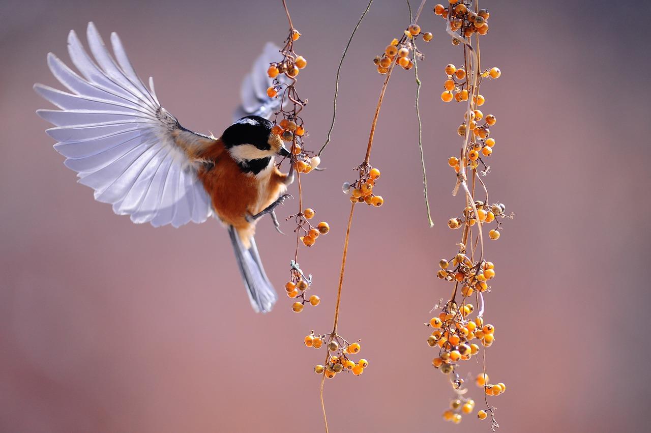 Скачать звук птиц в деревне