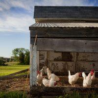 Деревенские фермерские продукты — натуральные?