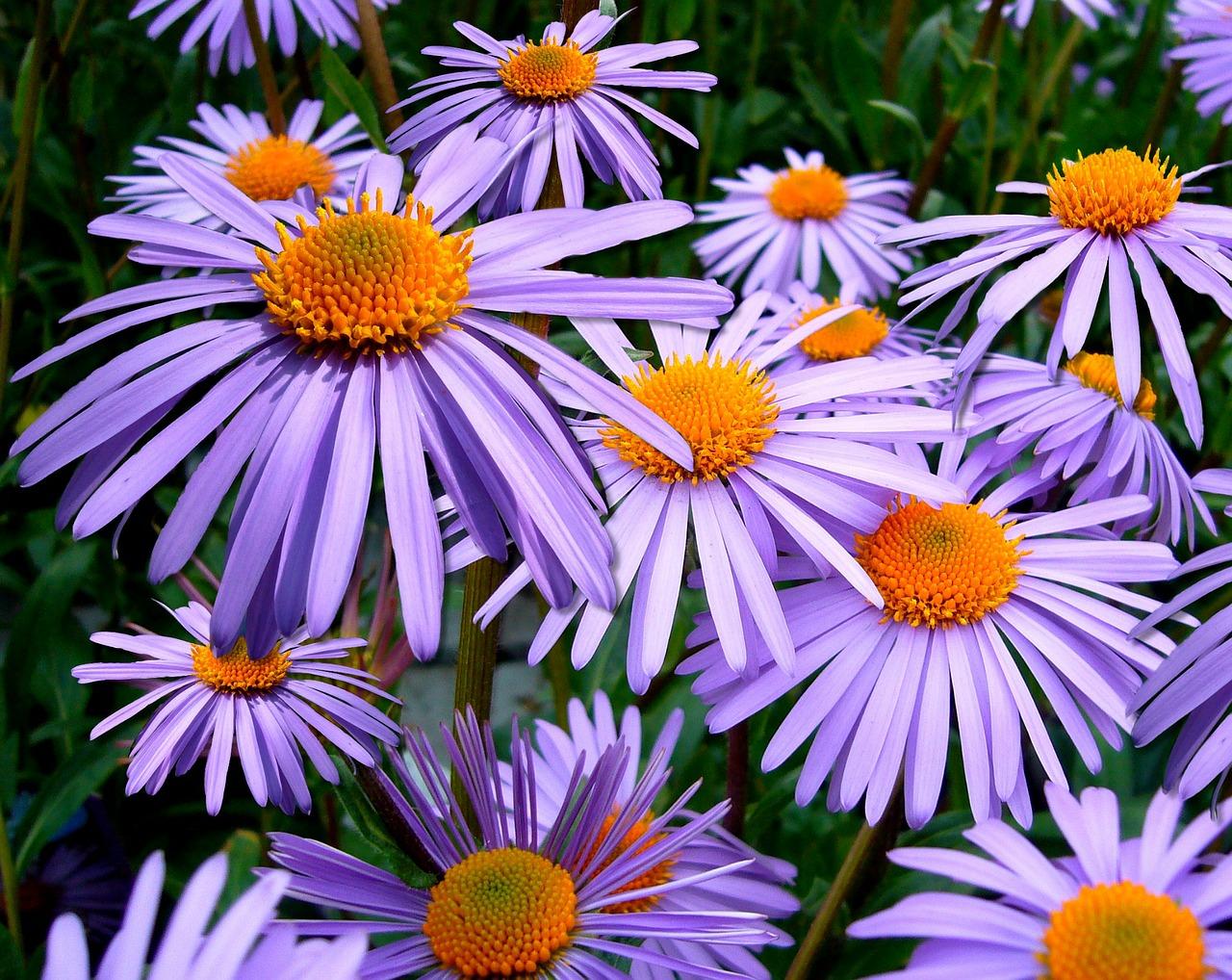 цветы цветущие в сентябре - 33 самых красивых