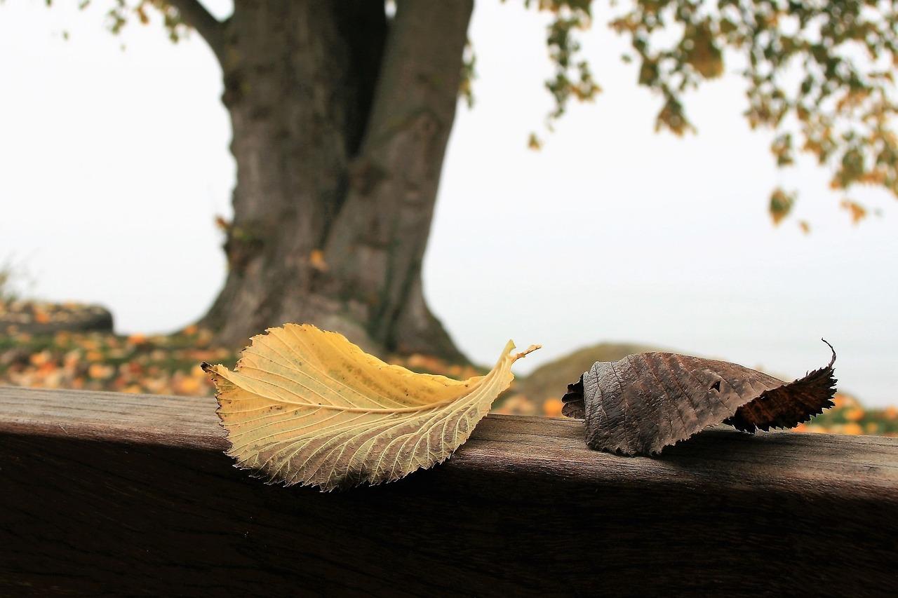 Красивые фото осени - осенние листья 2