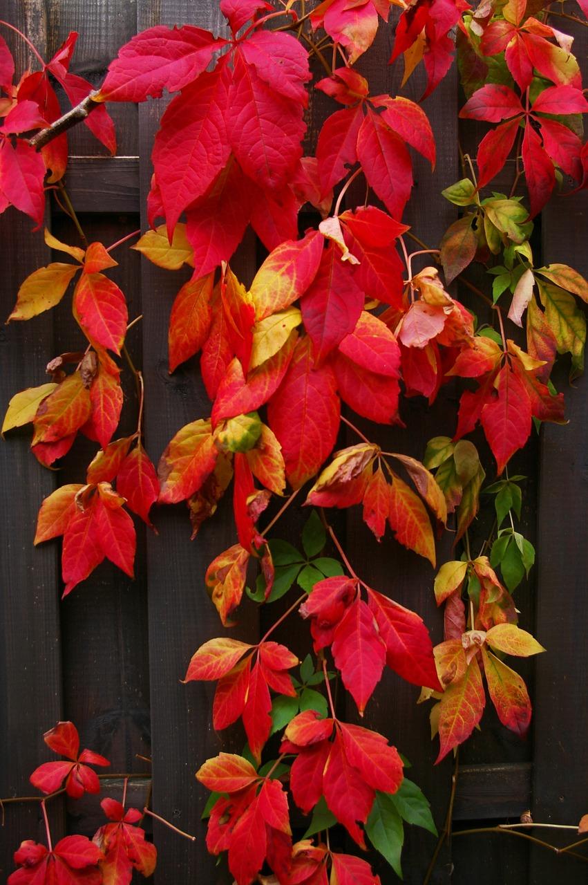 Красивые фото осени - осенние листья 3