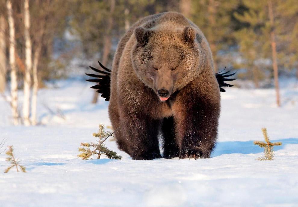 Красивая природа зимой фото 2