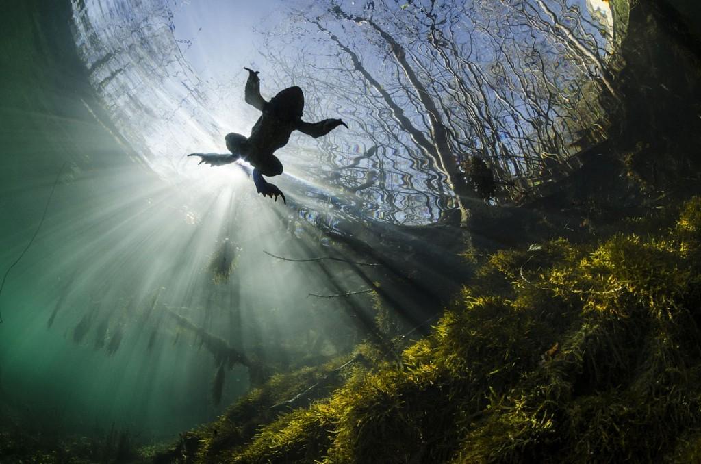 Красивая природа: лучшие фотографии конкурса Siena International Photography Awards 2017 - 5