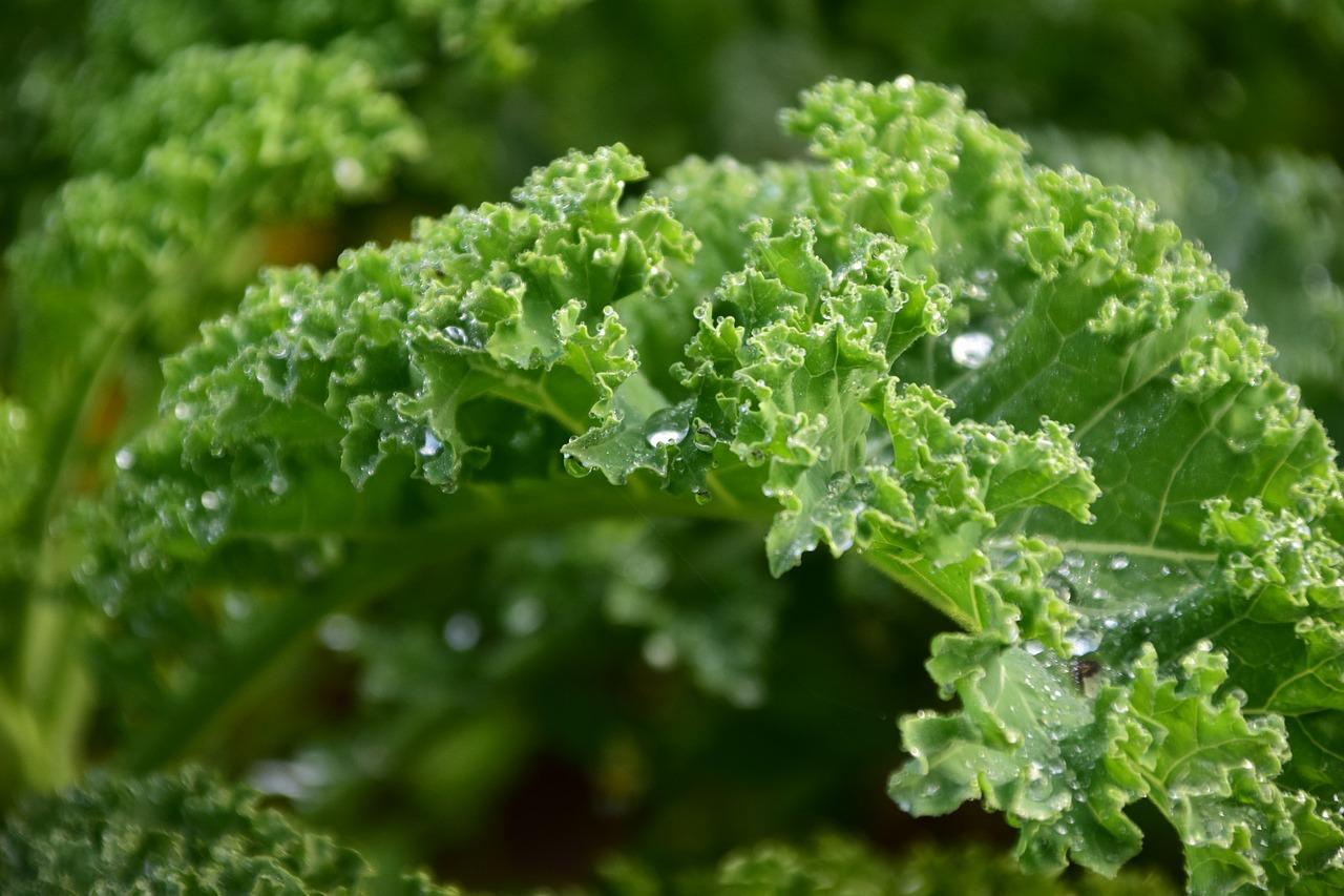 Капуста кейл (Kale) фото 10