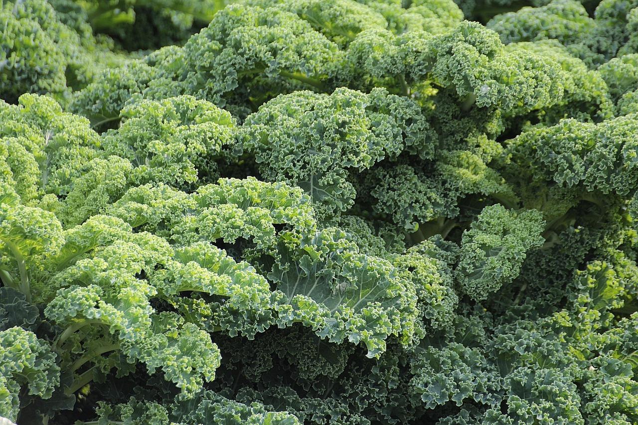 Капуста кейл (Kale) фото 6