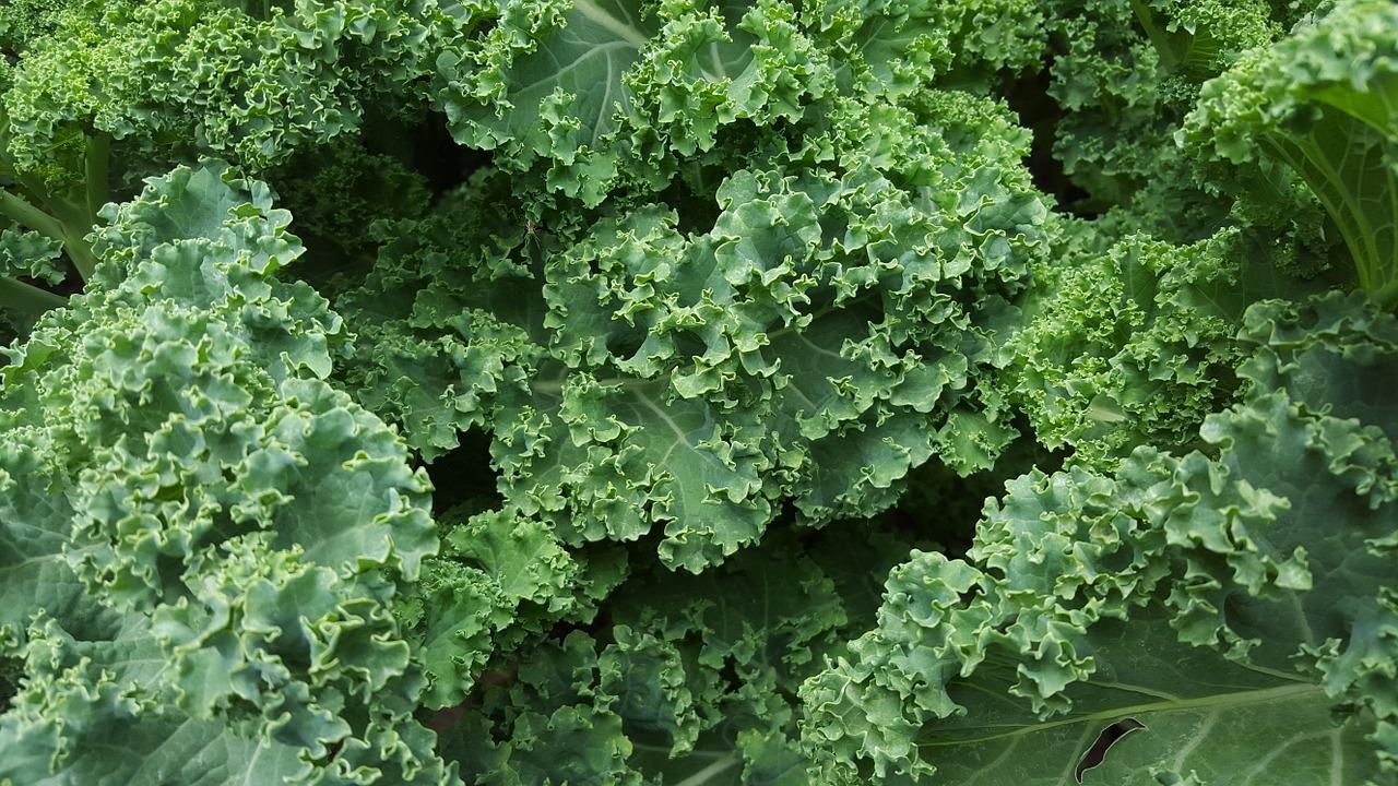 Капуста кейл (Kale) фото
