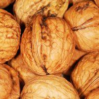 Размножение грецкого ореха орехами: как наследуются признаки?