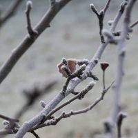 Замерзло дерево — что делать?