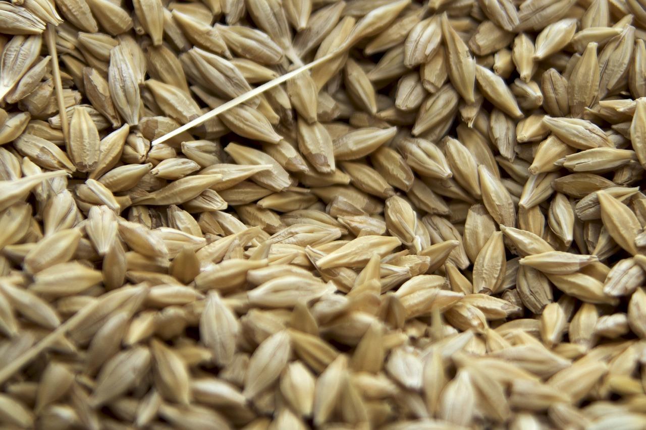 Температура хранения зерна - 10 аспектов мониторинга