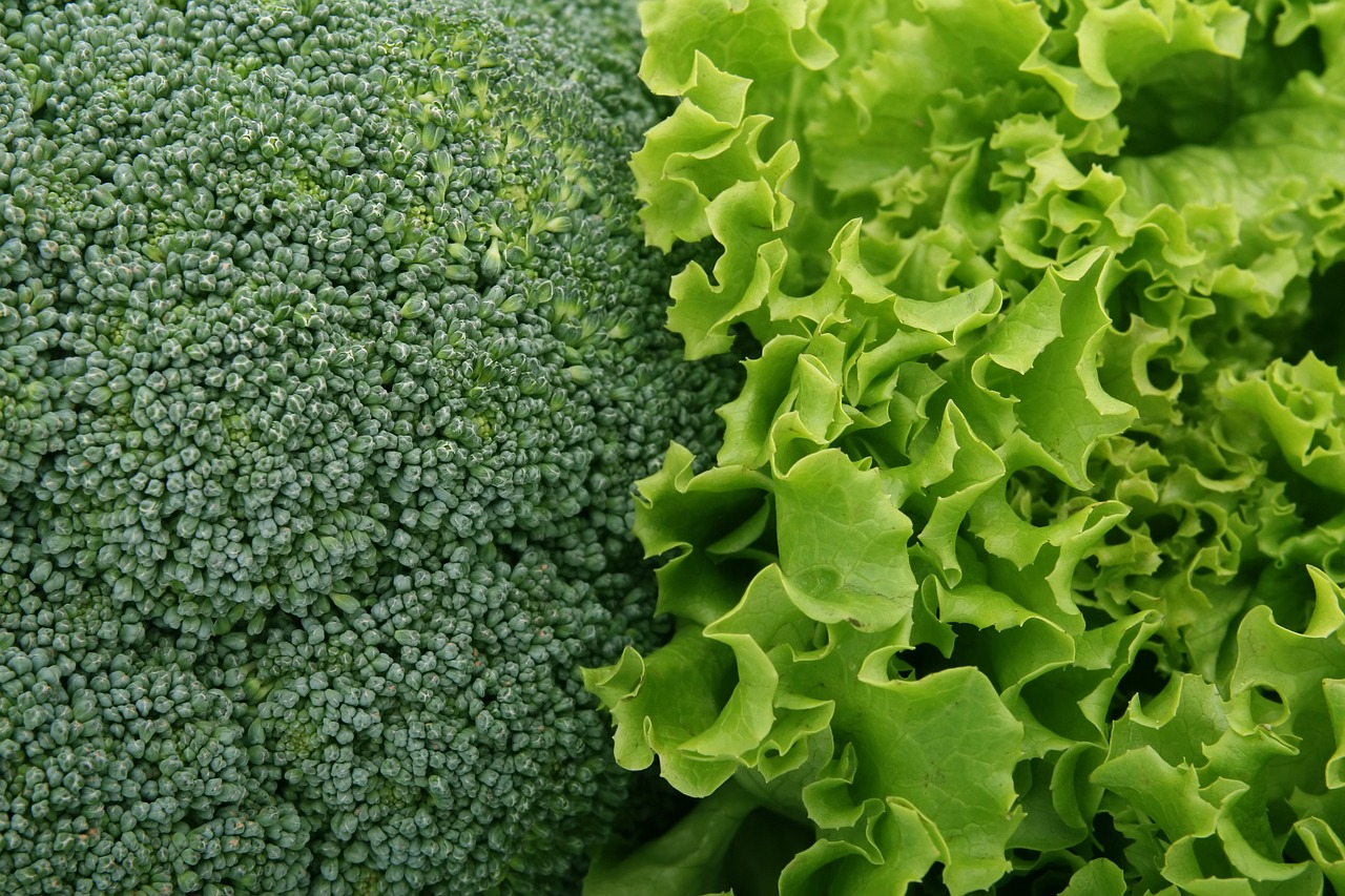 Схема севооборота овощных культур на огороде