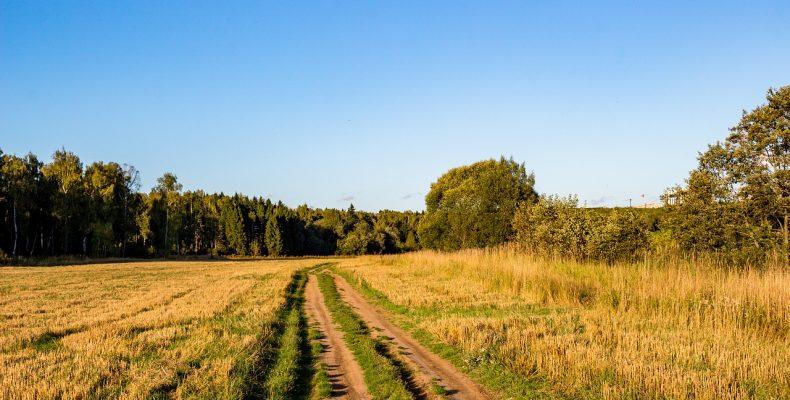 Стих «Приезжайте в деревню на лето…»