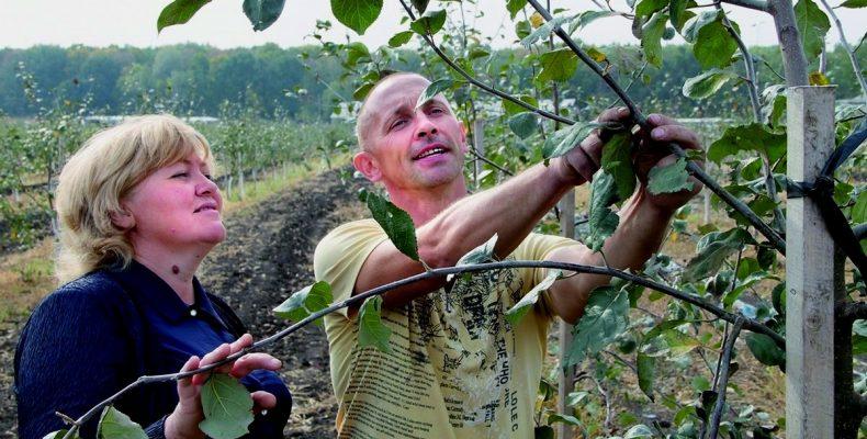 Яблоневый сад — посадка, видео