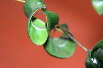 Дефицит питательных, минеральных веществ у растений
