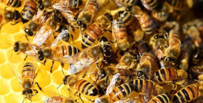 Пчелы в декабре: чем заняты пасечники перед Новым годом?