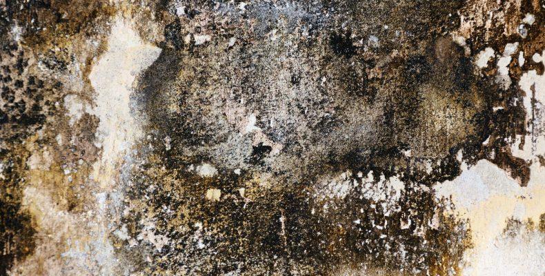 Плесень в доме — как избавиться от плесени?