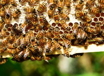 Пчелы в июне: ТОП-10 работ пчеловода в июне на пасеке