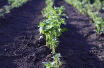 Огородные работы в июне: ТОП-20 самых актуальных