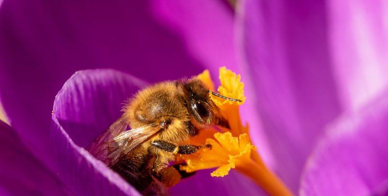 Пчелы в мае: ТОП-9 самых необходимых дел на пасеке