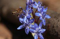 Пчелы в марте