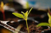 Огород в мае: огородные работы и хлопоты, ТОП-20 самых необходимых