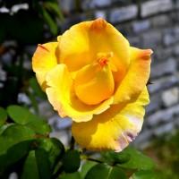 Всем, кто любит — растения и цветы для сада