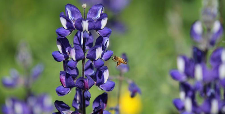 Работы в цветнике в июне: ТОП-25 самых необходимых