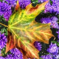 Цветы в сентябре-работы в цветнике в сентябре