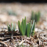 Цветник в апреле: сезонные работы в цветнике
