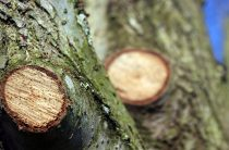 Обрезка деревьев — механический обрезчик