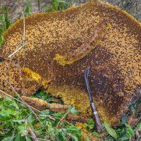 Дикие пчелы в горах — фото