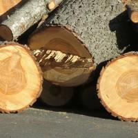 Какие дрова самые жаркие?