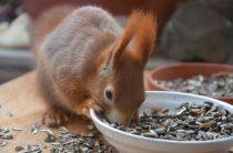 Что едят белки: 15 фактов, 5 вопросов, 30 фото