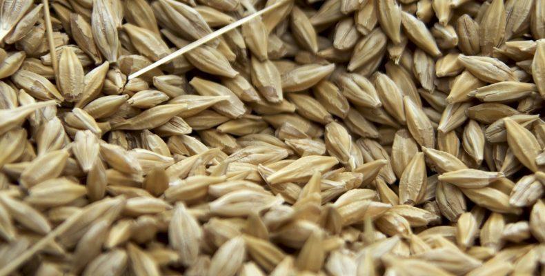10 аспектов мониторинга температуры хранения зерна, которые невозможны без покупки термоштанги
