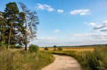 «Я иду долиной» Сергей Есенин — стих про деревню