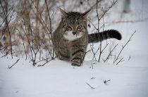 Коты и кошки зимой