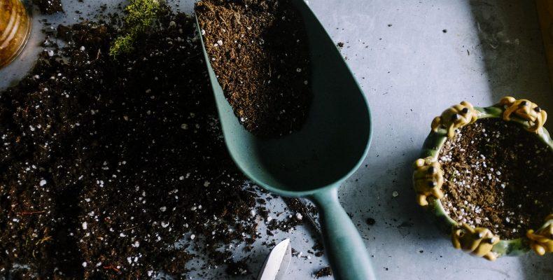 Лунный календарь садовода и огородника — март 2019