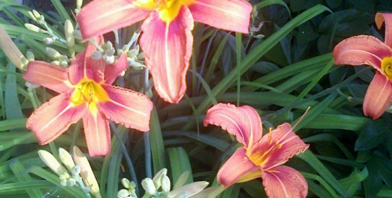 Красивая клумба на даче из многолетников — где найти растения?