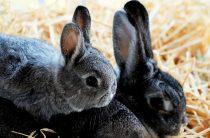 Домашние кролики: весенние хлопоты кроликовода
