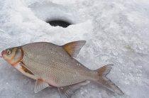 Зимняя рыбалка: ловля леща зимой