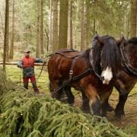Содержание рабочих лошадей: 18 условий для хорошей работы