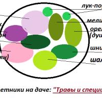 Цветник из пряных трав: схемы своими руками