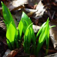 Огород в апреле
